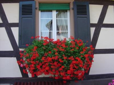 gite location de vacances diebolsheim